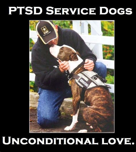 Ptsd Dog Meme - 84 best images about dogs on pinterest poodles for dogs