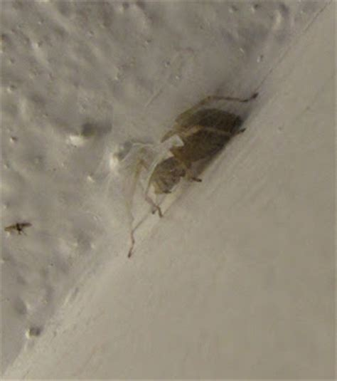 long insects in bathroom bug eric spider sunday longlegged sac spiders