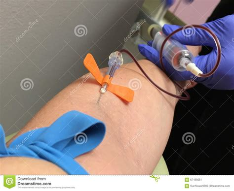 Drawing Blood by Phlebotomist Drawing Blood Stock Image Image Of