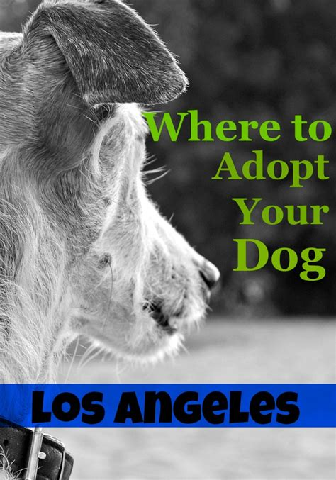 puppies for adoption in los angeles where to adopt a in los angeles