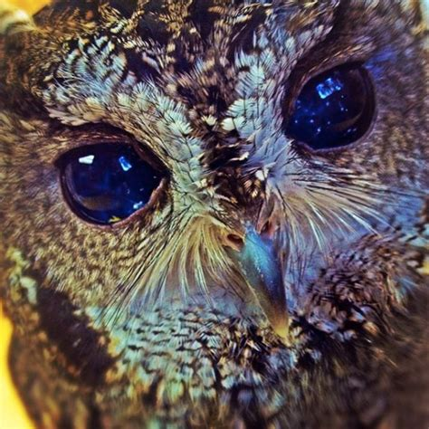 zeus the in photos an update on zeus the starry eyed owl success stories earth touch news