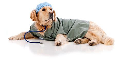 imagenes de medicas veterinarias cursos op 231 227 o primeiros socorros veterin 225 rio