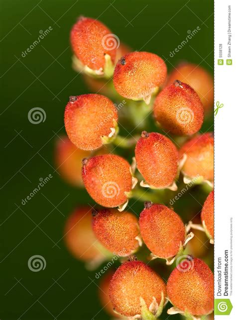 flowers and fruits from the wilderness or thirty six years in and two winters in honduras classic reprint books fruits of flower stock photo image of tree bloom