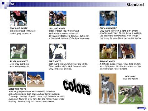 alaskan malamute colors alaskan malamute seminar
