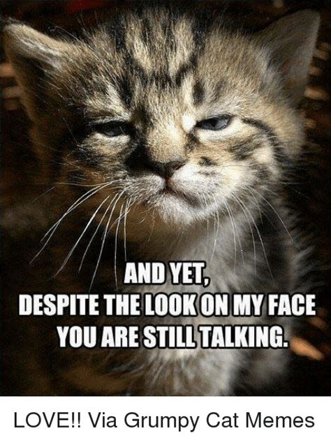 Grumpy Face Meme - 25 best memes about cats grumpy cat meme and memes cats grumpy cat meme and memes