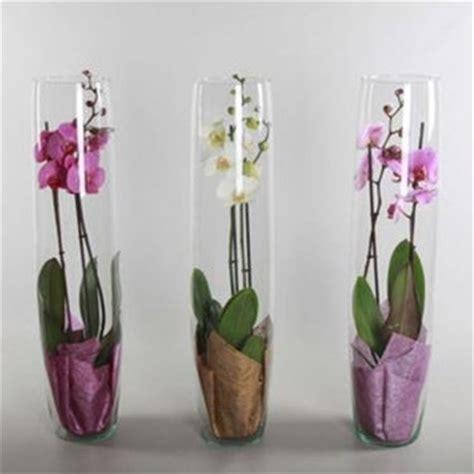 vasi per orchidee come scegliere i vasi per orchidee scelta dei vasi
