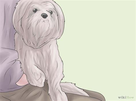 how to potty a shih tzu how to potty a shih tzu 6 steps with pictures wikihow