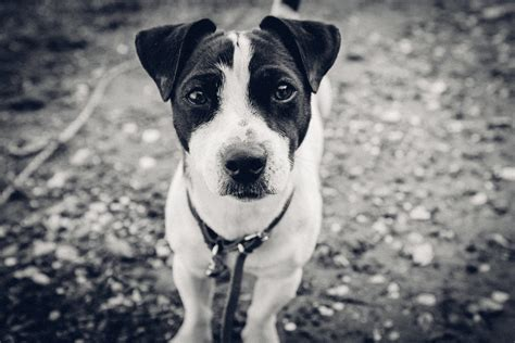 puppy black and white black and white puppy bossfight