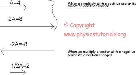 tutorial vector and scalar vectors