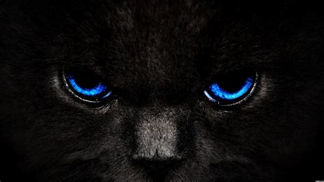 chat mata wallpaper animals zoo park black cat eyes wallpapers blue cat eyes