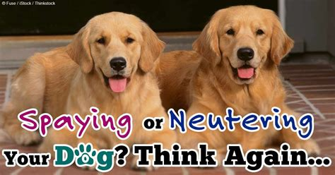 how will my be in after neutering pets n more spaying or neutering your think again