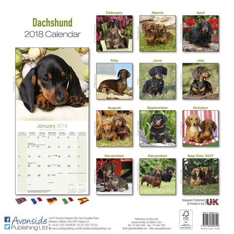 doxie calendar 2018 books dachshund calendar 2018 pet prints inc