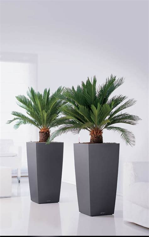 Indoor Planters Uk by Lechuza Cubico Planters