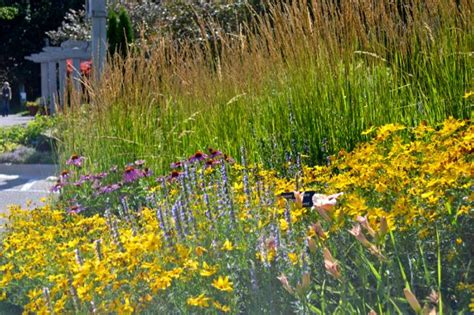 Minnesota Landscape Arboretum What S Blooming Celebrate July S Profusion In The Garden Toronto Gardens