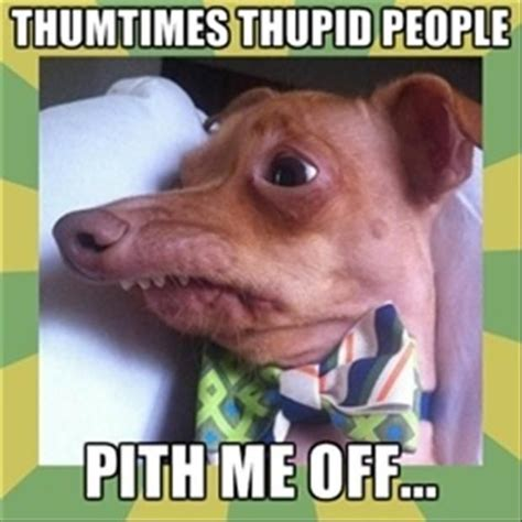 Phteven Dog Meme - 89 best images about lisp meme dog on pinterest 4th birthday pho and funny animal humor