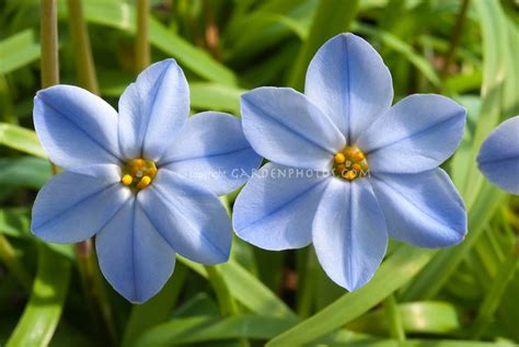 blue flowers picture tiny flowers in bloom light colored beautiful blue flower weneedfun