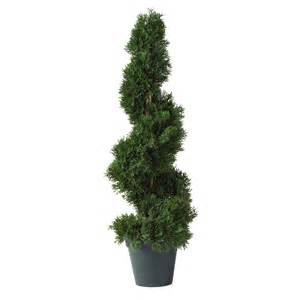 Spiral Topiary Trees - 2 foot cedar spiral topiary potted 5160