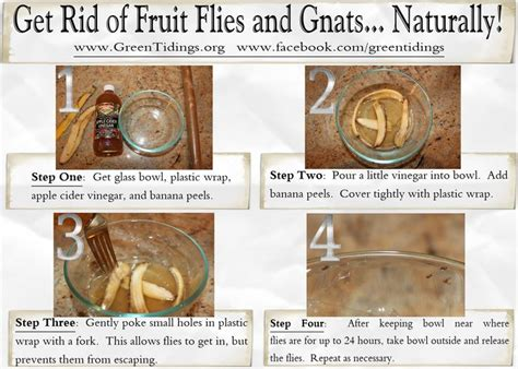 Gnats In Kitchen How To Get Rid Of Them by 55 Best Images About Organic Dyi Insect Repellants On