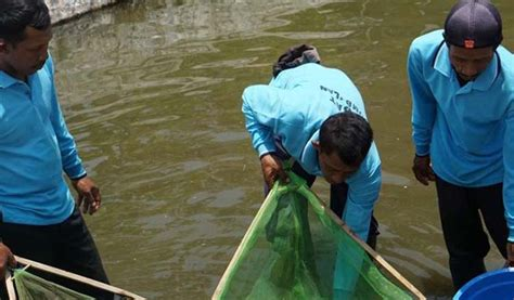 Cacing Lamongan ppid dinas kelautan dan perikanan provinsi jawa timur