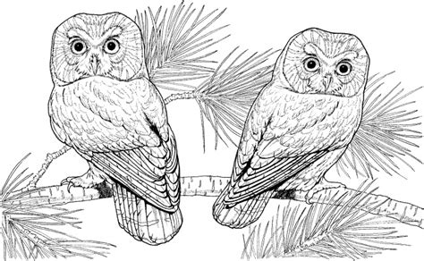 hard coloring pages of owls owl coloring pages hard owl coloring pages kids coloring