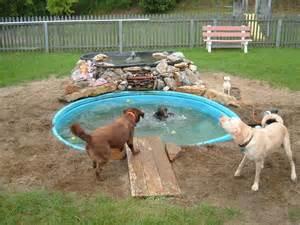backyard dog pool dog pond pool pic
