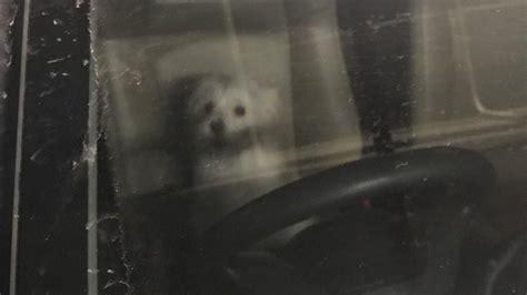detiknews valent gandeng garda satwa tommy mau anjing valent dapat pemilik