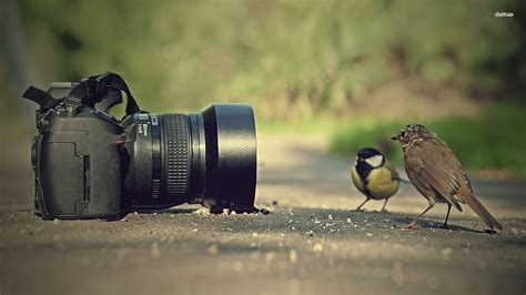 best digital for photography portuguese and photography 187 learn portuguese in brazil