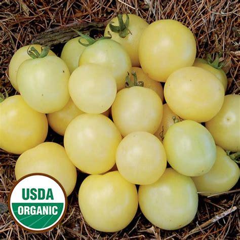 Cherry White white cherry organic tomato seed savers exchange