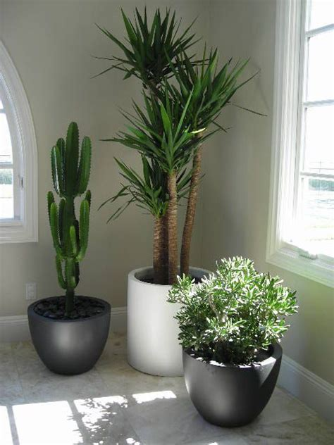 best plants for an office best 25 office plants ideas on pinterest office ideas