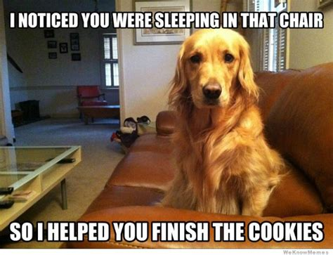 10 Dog Meme - funny dog memes the ultimate collection dog training