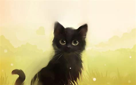 black kitty wallpaper curious black kitty wallpaper 16527