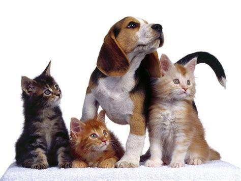 imagenes de mascotas fotos de mascotas imgenes de perros y gatos holidays oo