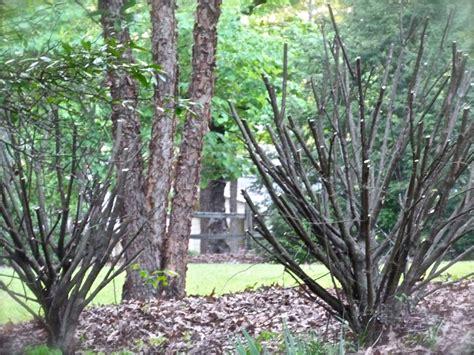 five rules to prune by deb s garden deb s garden blog