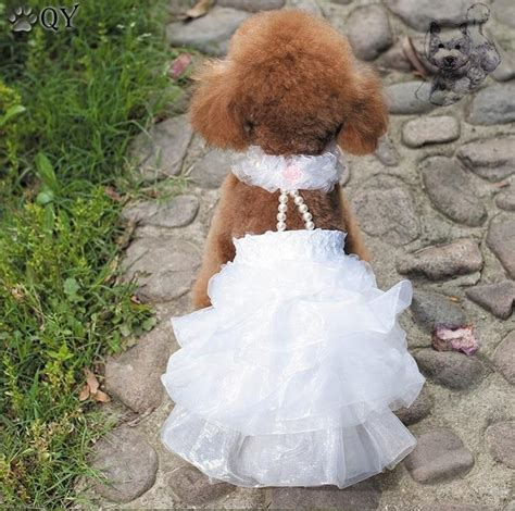 puppy wedding 25 best ideas about wedding on weddings with pets pets at weddings