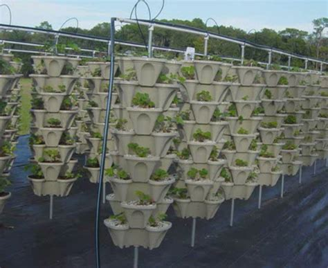 Vertical Garden Pvc Design Chico Aquaponic Idea For Vertical Gardening