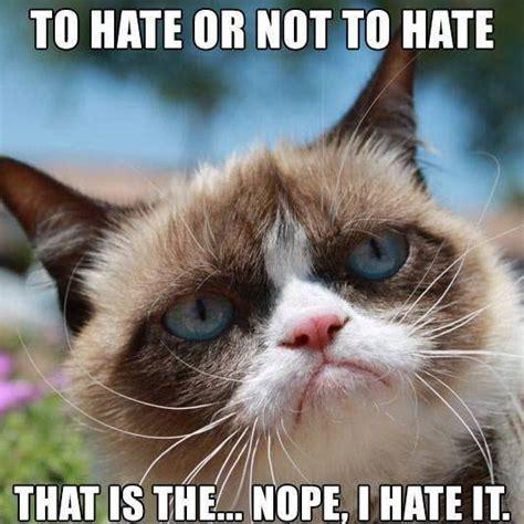 Grumpy Cat Meme Love - grumpy cat quotes sayings 66 quotations