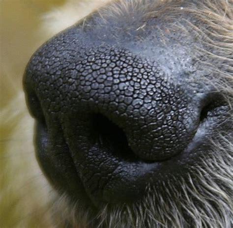nose puppy understanding a s senses