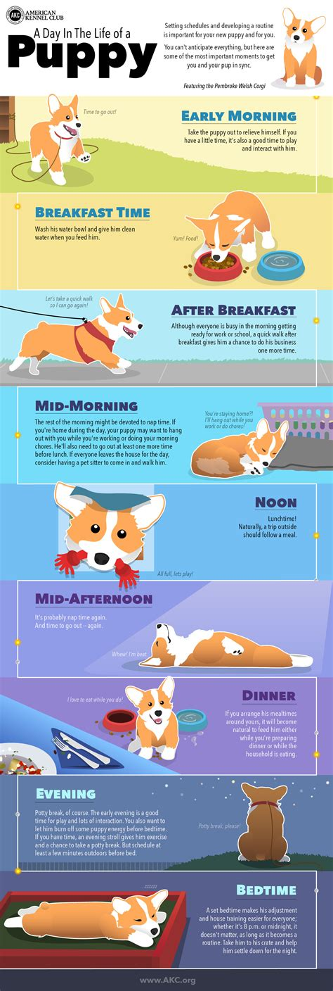 what is the schedule for puppy why developing a daily schedule for your new puppy is the key to success