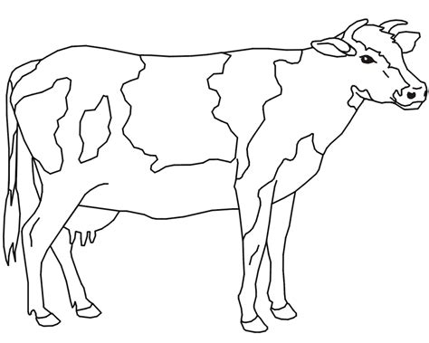 dairy cow coloring page cow coloring pages dairy cow coloringstar