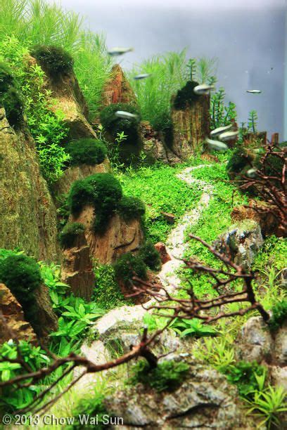 Fish Tank Aquascape Designs by 2013 Aga Aquascaping Contest Entry 310 Aquarium