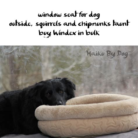 window seats for dogs haiku by window with dogs and cats
