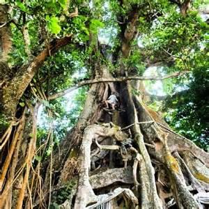 hidden gems in balinese villages find adventure in bali