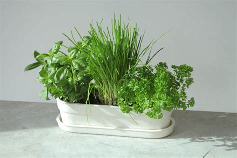 Indoor Herb Planter Box by Design Week Herbivore Planter By Jody Leach