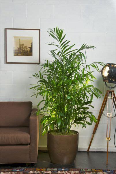 inside home plants grow bamboo indoors bitesizegardening com