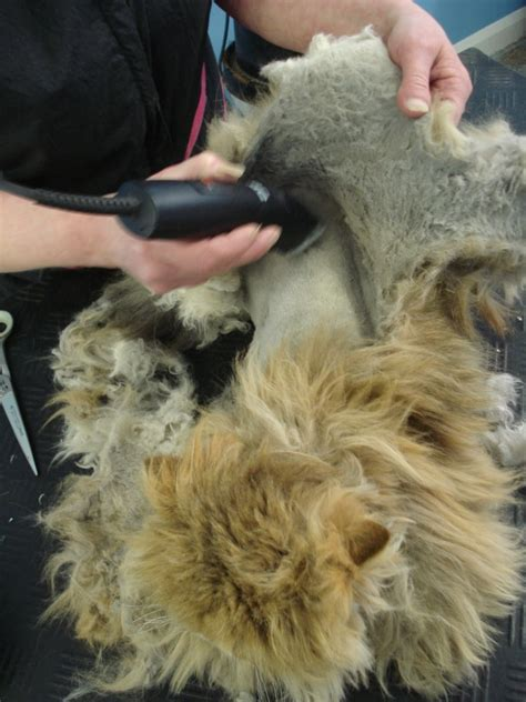 What Causes Cat Fur To Mat by