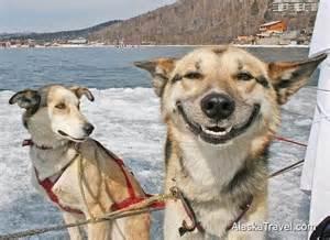 Blind Luck Horse Alaska Travel Photos Gt Talkeetna Sundog Kennel Gt Happy Dogs