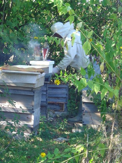 backyard beekeeping for beginners de 12 b 228 sta razas de gallos bilderna p 229 pinterest