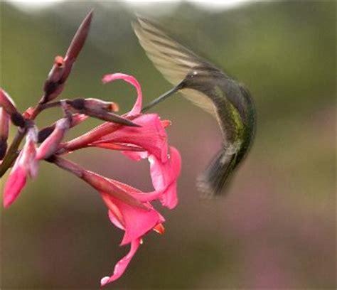 hummingbird food bigoven 163644