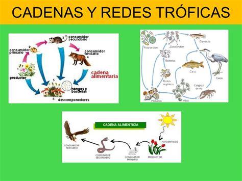 cadenas troficas ecologia biosfera i los ecosistemas ppt video online descargar