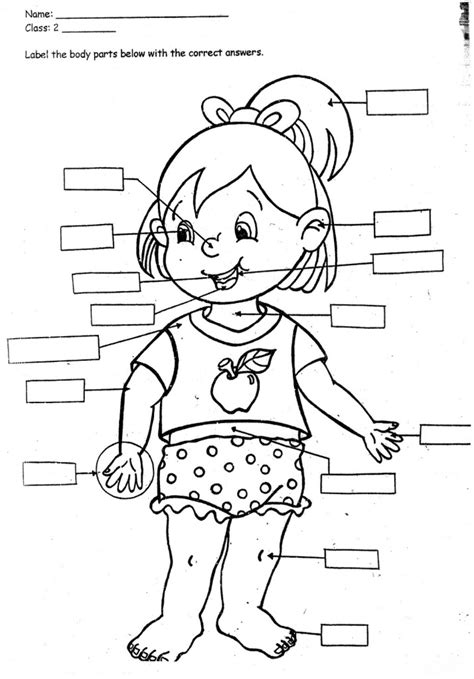 preschool coloring pages human body print body parts coloring pages for kids laptopezine